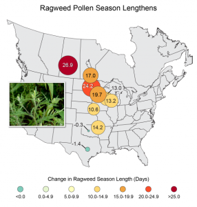 Increasing length of ragweed pollen season over past twenty years due to warming climate
